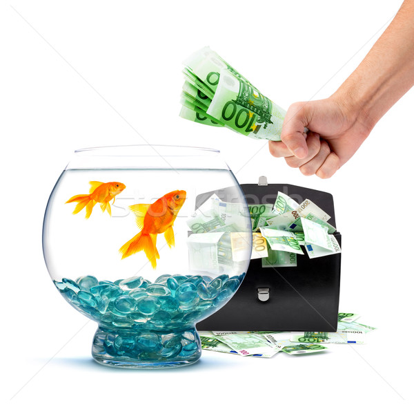 Goudvis geld aquarium witte business water Stockfoto © bloodua