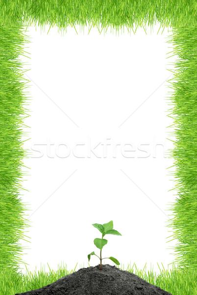 Verde isolado branco grama folha Foto stock © bloodua
