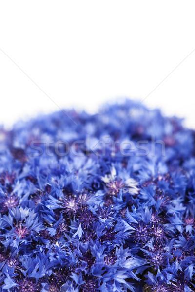 Beautiful spring flowers blue cornflower on background. Blue flo Stock photo © bloodua
