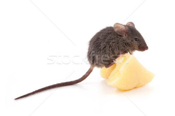 Muis kaas geïsoleerd witte achtergrond leuk Stockfoto © bloodua