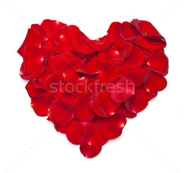 Heart shape made out of rose Stock photo © bloodua