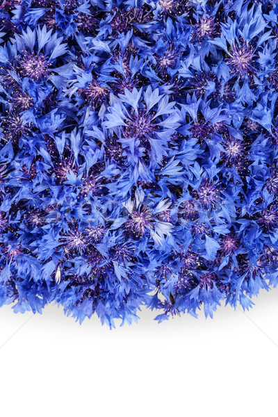 Stok fotoğraf: Güzel · bahar · çiçekleri · mavi · çiçekler · model
