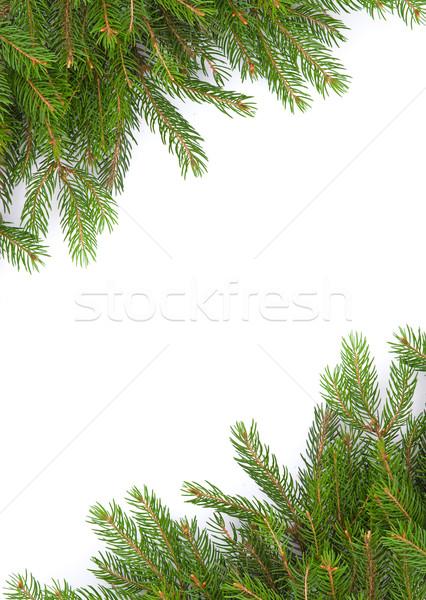 Karácsony váz zöld izolált fehér természet Stock fotó © bloodua