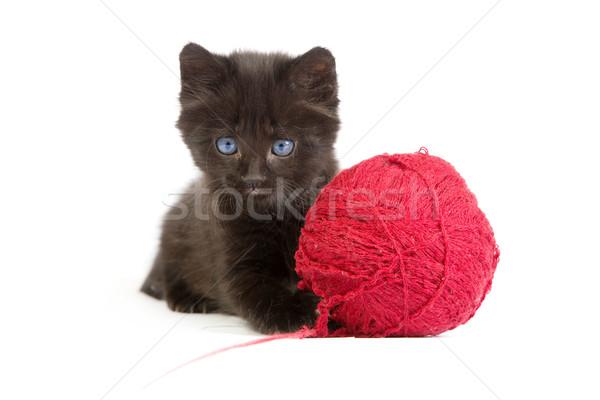 Siyah kedi yavrusu oynama kırmızı top iplik Stok fotoğraf © bloodua