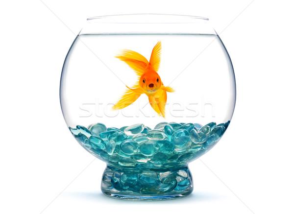 Peixe-dourado aquário branco água natureza vida Foto stock © bloodua