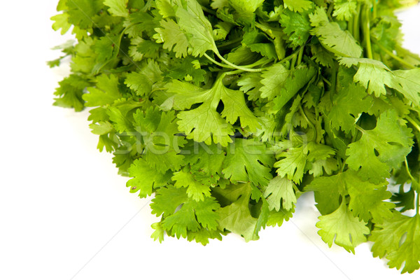 Parsley tied in a bunch with twine isolated Stock photo © bloodua