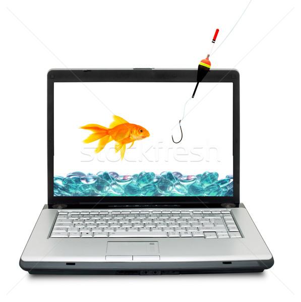 Goldfish аквариум изолированный белый интернет рыбы Сток-фото © bloodua