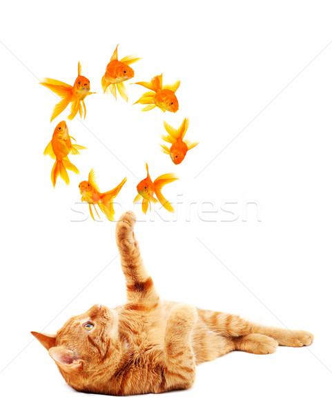 Foto stock: Gato · jogar · isolado · branco · peixe · cabelo