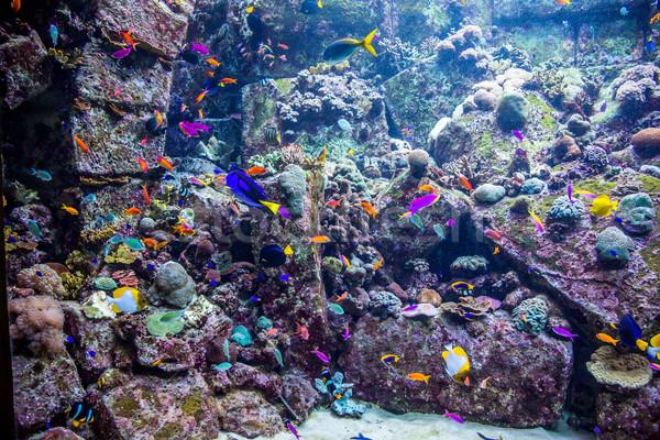 Akvárium trópusi hal korallzátony fotó Dubai víz Stock fotó © bloodua