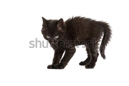 Cute black kitten on  a white background Stock photo © bloodua