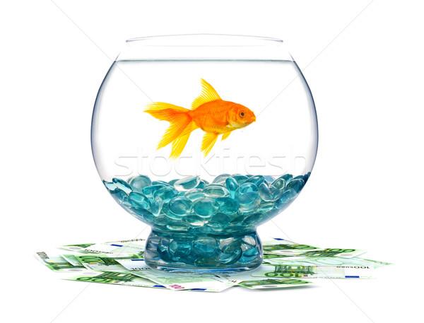 金魚 水族館 白 水 魚 金 ストックフォト © bloodua