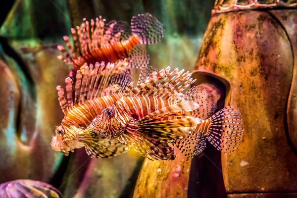 Ver venenoso vermelho Dubai aquário Foto stock © bloodua