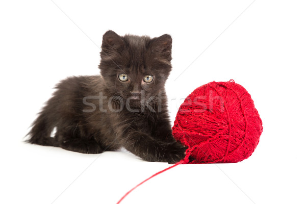 Black kitten playing with a red ball of yarn on white background Stock photo © bloodua