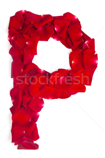 Letter P made from red petals rose on white Stock photo © bloodua