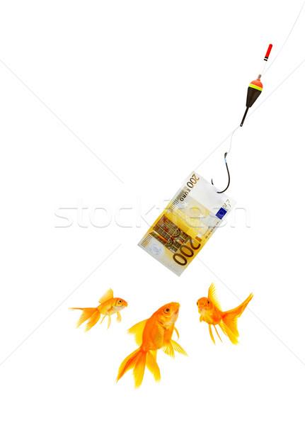 Peixe-dourado aquário branco peixe vidro financiar Foto stock © bloodua