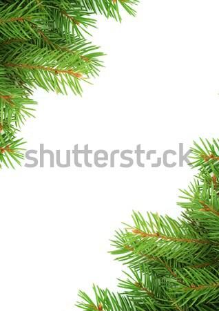 Karácsony váz zöld izolált természet levél Stock fotó © bloodua