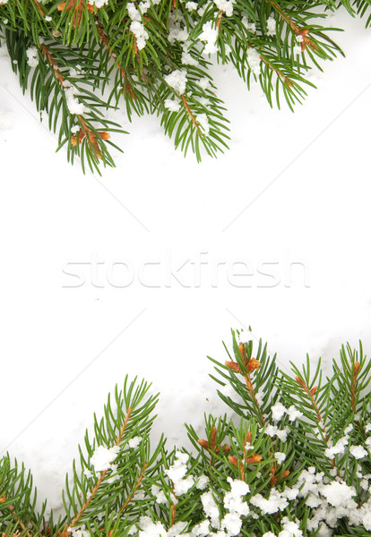 Karácsony váz hó izolált fehér természet Stock fotó © bloodua