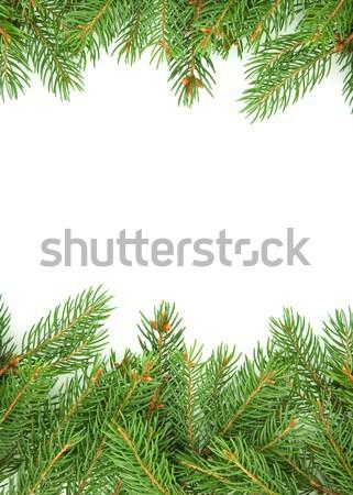 クリスマス フレームワーク 緑 孤立した 白 自然 ストックフォト © bloodua