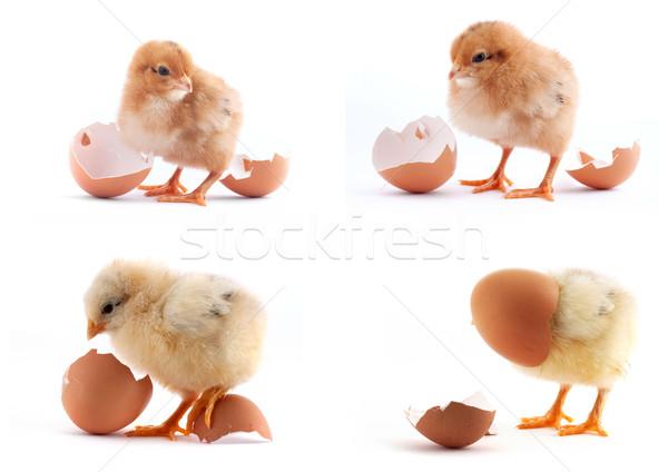 Conjunto amarelo pequeno garotas ovo isolado Foto stock © bloodua