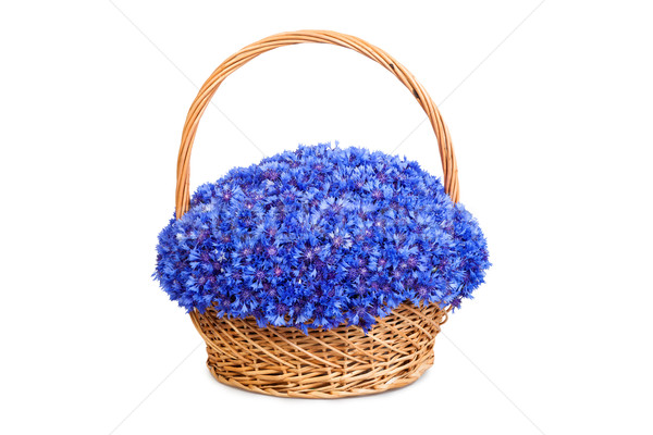 Beautiful blue cornflowers in a basket Stock photo © bloodua