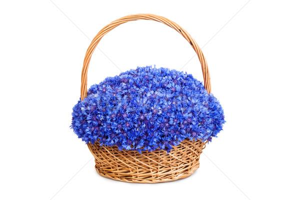 красивой синий корзины изолированный белый весны Сток-фото © bloodua