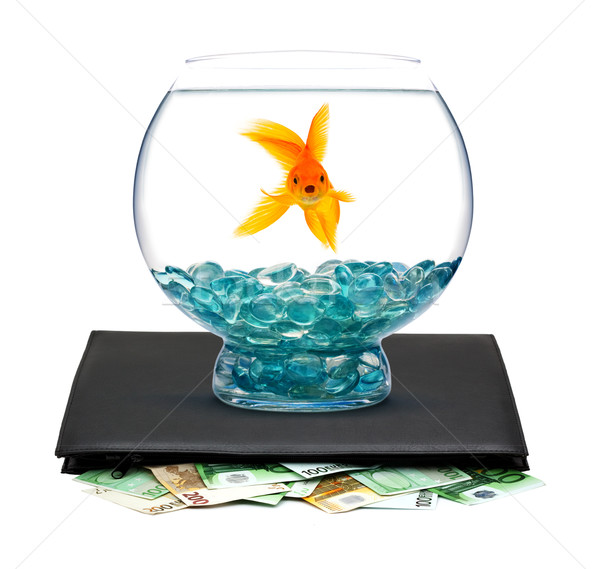 Goldfisch Geld Aquarium weiß Wasser Fisch Stock foto © bloodua