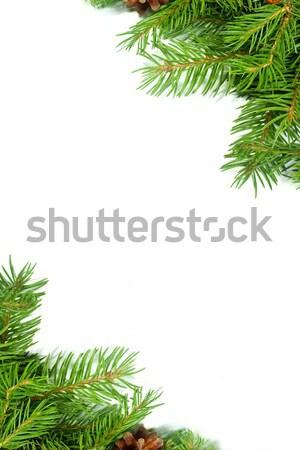 クリスマス 緑 フレームワーク 孤立した 白 自然 ストックフォト © bloodua