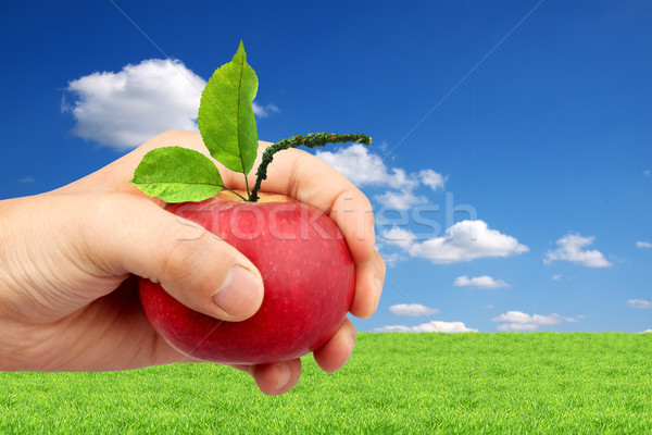 An apple in the hand Stock photo © bloodua