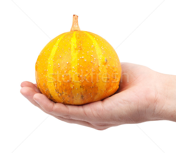 Halloween pumpkin Stock photo © bloodua