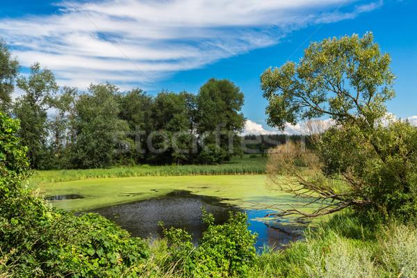 Panorama of summer morning lake Stock photo © bloodua