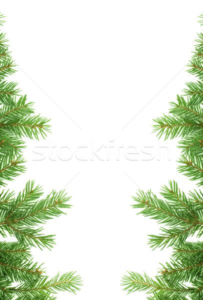 Christmas struktura zielone odizolowany biały charakter Zdjęcia stock © bloodua