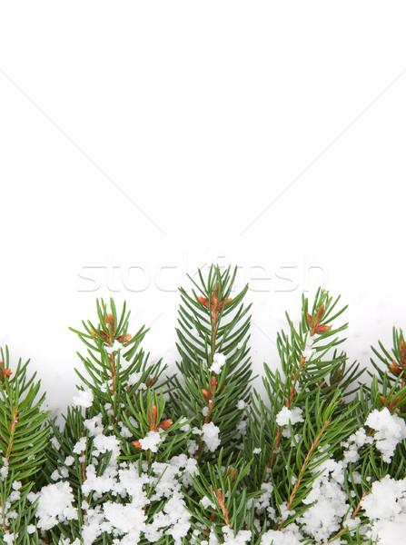 Karácsony váz hó izolált fehér erdő Stock fotó © bloodua