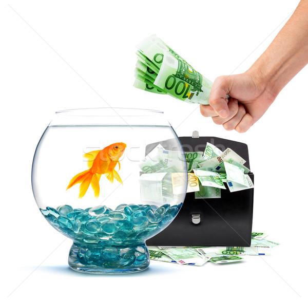 Goldfish деньги аквариум белый бизнеса воды Сток-фото © bloodua