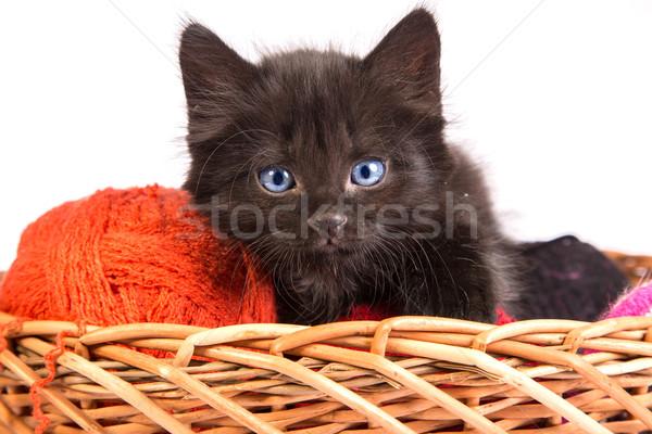 черный котенка играет красный мяча пряжи Сток-фото © bloodua