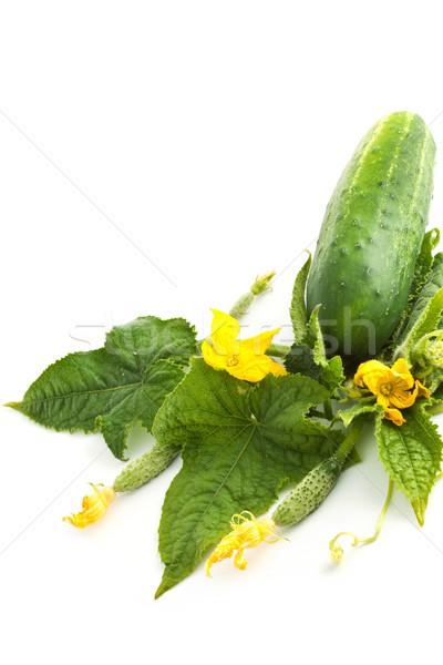 Komkommer witte bloemen bladeren witte bloem voedsel Stockfoto © bloodua