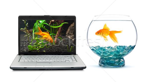 金魚 水族館 白 コンピュータ 愛 魚 ストックフォト © bloodua
