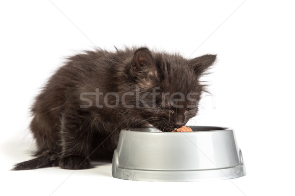 Noir chaton manger chat alimentaire blanche Photo stock © bloodua