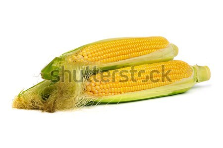 Stock photo: Ear of corns with husk. Isolated on white.
