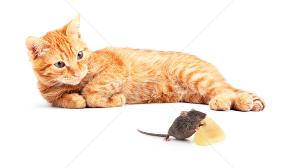 Mouse and cat Stock photo © bloodua
