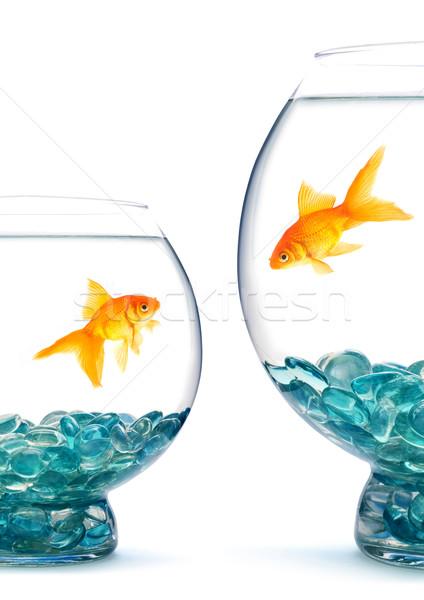 аквариум белый воды рыбы золото плаванию Сток-фото © bloodua