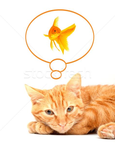 Foto stock: Gato · jogar · isolado · branco · vermelho · bonitinho