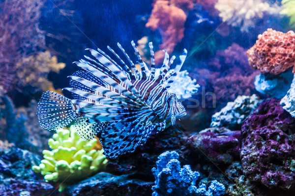 Photo stock: Vue · venimeux · rouge · Dubaï · aquarium
