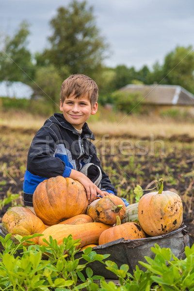 Cute boy with a wheelbarrow full of pumpkin Stock photo © bloodua