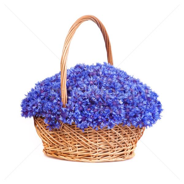 Piękna niebieski koszyka odizolowany biały wiosną Zdjęcia stock © bloodua