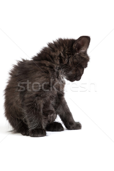 Cute black kitten on  a white background Stock photo © bloodua