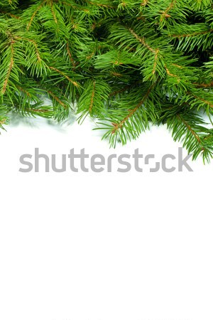 Christmas background. Eve framework Stock photo © bloodua