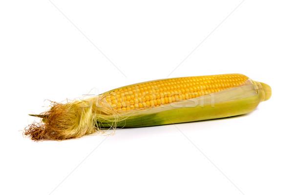 Fresh uncooked corn on the cob Stock photo © bloodua