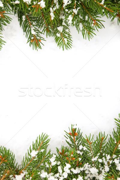 Christmas struktura śniegu odizolowany biały drzewo Zdjęcia stock © bloodua