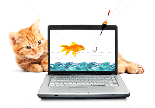 Goldfish, cat, laptop  Stock photo © bloodua