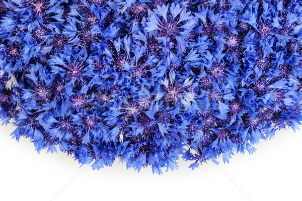 Beautiful spring flowers blue cornflower on background Stock photo © bloodua